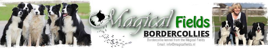 Magical Fields bordercollie kennel